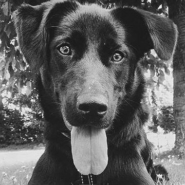 Bürohund Emma ÖGPO